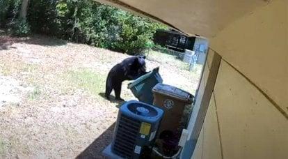 Sokaktaki ayılar: doğa bir salgın sırasında sevinir