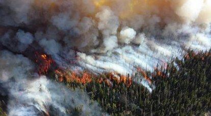 A morte da floresta russa e a questão da qualidade da gestão