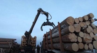 拯救俄罗斯森林:政府是在反对毁林还是假装?