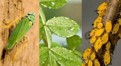 """Entomologische Kriege und die """"guten Insekten"""" des Pentagons"""