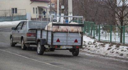 콜로라도 바퀴벌레의 노트. 종파 - 그것은 우크라이나의 분파입니다!