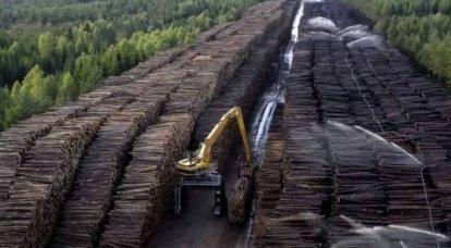 पुतिन ने देश से कच्चे लकड़ी के निर्यात पर पूर्ण प्रतिबंध लगाने का आदेश दिया