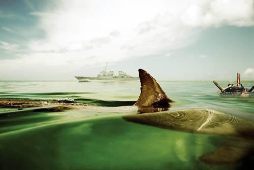 돌고래와 싸우다
