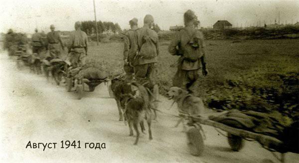 C-470,为军队服务的狗