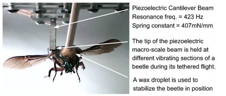 Biorobot böcekleri elektrik jeneratörleri kurar