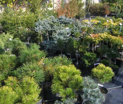 Декоративные растения на службе
