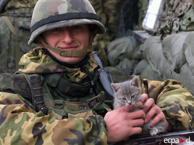 Кошки на войне