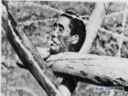 Кошмарные страницы войны: японские солдаты-каннибалы