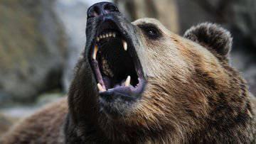 """러시아 곰이 이유 때문에 화가 나다 (스페인, """"Rebelion"""")"""