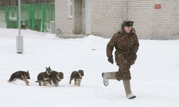 강아지가 국경 보호가되는 방법