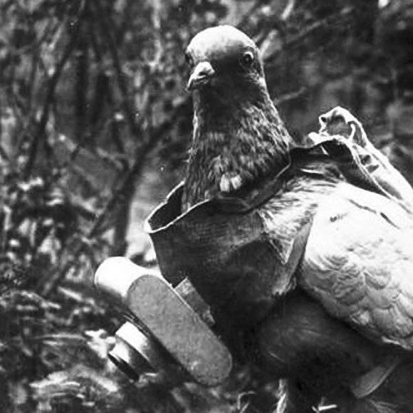 Conexão de pombo militar no Exército Vermelho na véspera e durante a Grande Guerra Patriótica