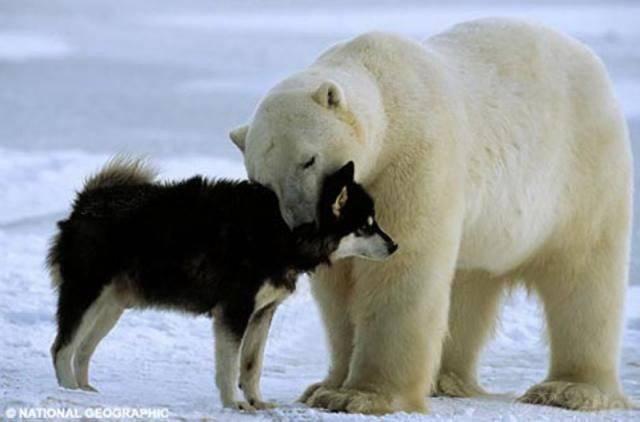 В Канаде рассуждают о войне с Россией, или Страсти вокруг шельфа и Северного полюса