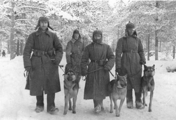 狗在战争中