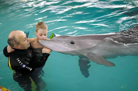 什么是海豚沉默