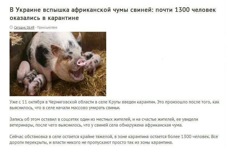 Свинское дело