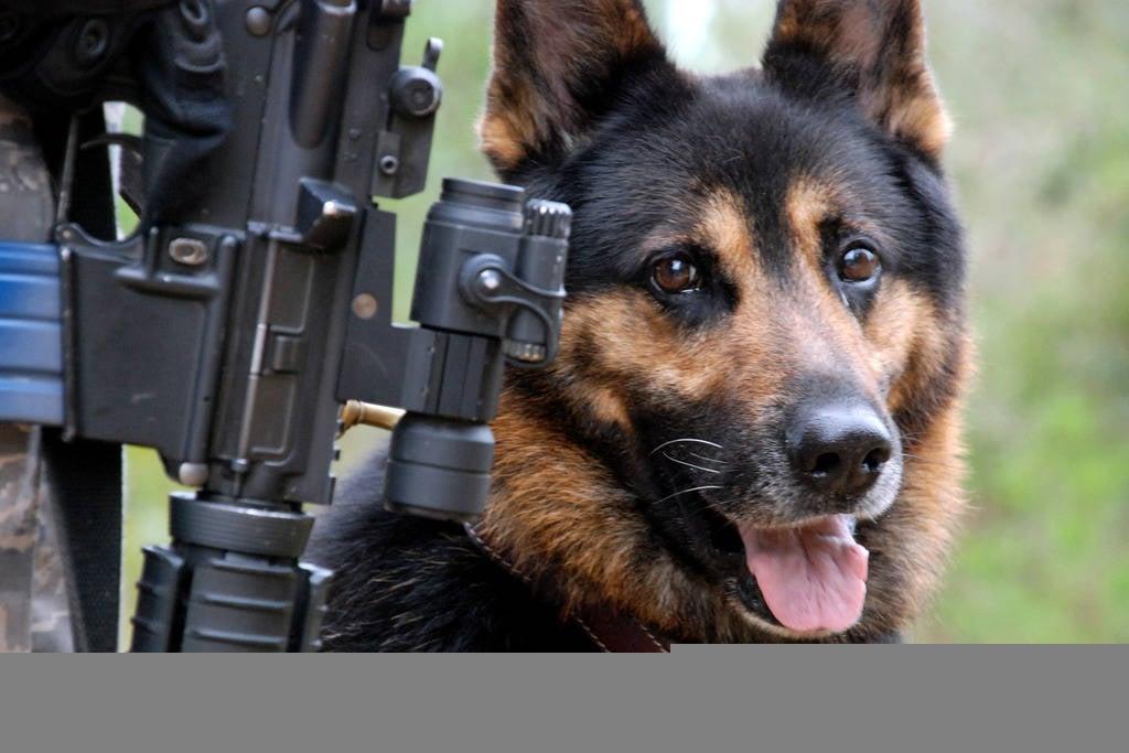 них картинки военные животные специалисты