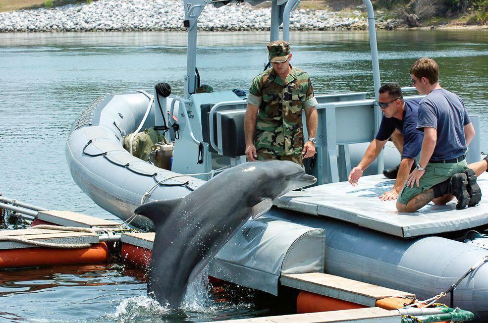 картинки боевых дельфинов бурые ушаны медлено