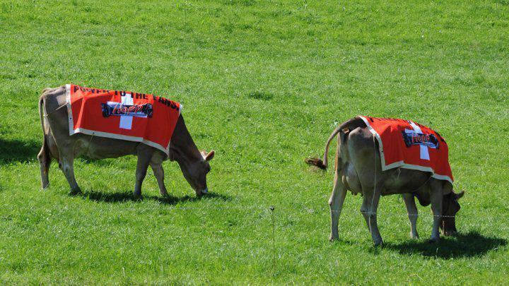 Francia e Svizzera hanno litigato per elicotteri e mucche militari