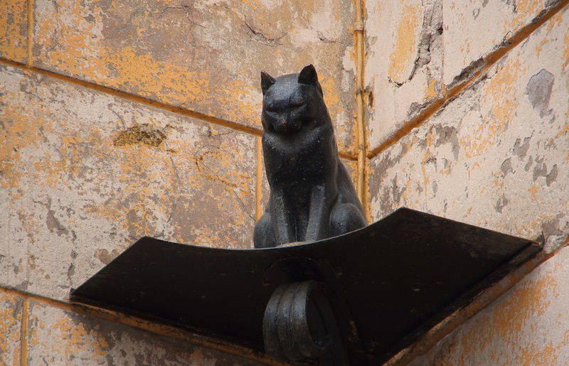 Картинки по запросу кошки ленинграда
