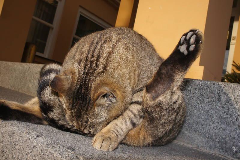 トリッキーなコメント 猫、または女性と紳士については、私はただろくでなしです!