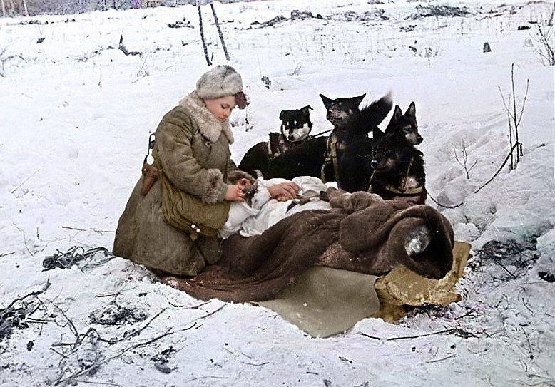 ロシア犬とドイツ犬の決闘
