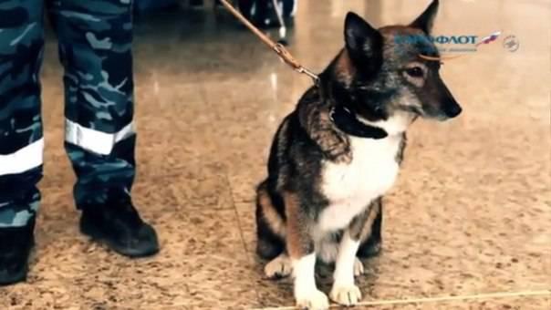 День кинолога МВД. Как появилось и развивалось полицейское собаководство