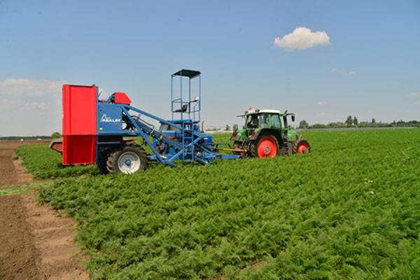 Rusya ekonomisinin tarım lokomotifi üzerindeki yeni oran