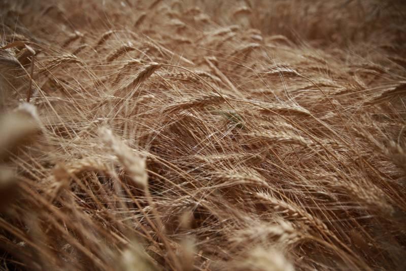 В КНР отказались от закупок украинских зерновых в связи с их низким качеством
