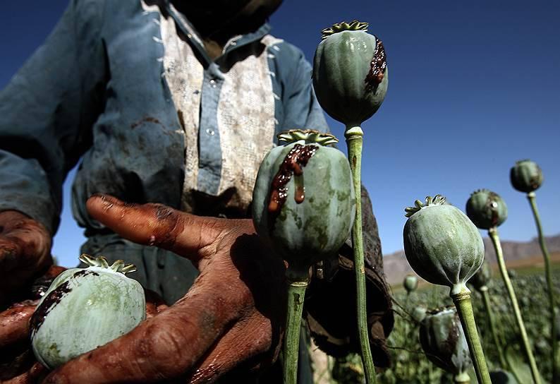 ООН: производство опиума в Афганистане выросло на 43 %