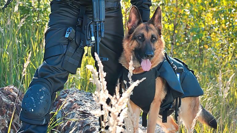 «Армоком» начал серийные поставки в российские спецслужбы бронежилетов для служебных собак