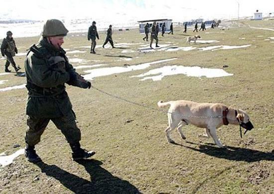 И о животных... В ЮВО поступили собаки минно-розыскной службы