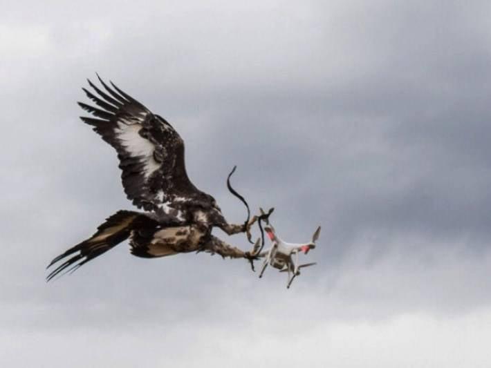Французские ВВС научат орлов бороться с беспилотниками