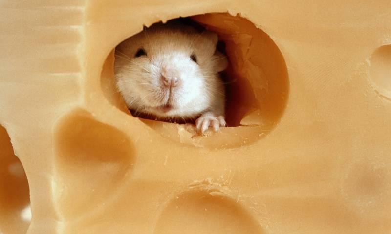 Записки Колорадского Таракана. Много сыра — много дырок, много дырок — мало сыра, много сыра — мало сыра?