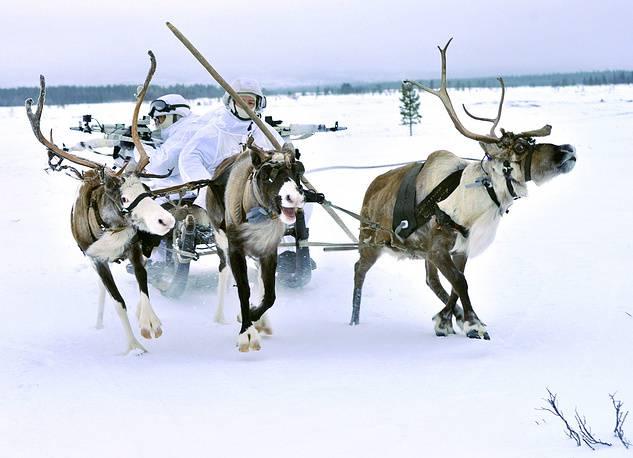 Олени на учениях Арктической бригады