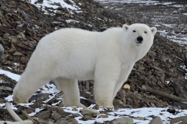 """Британские СМИ заявили, что Россия """"могла взорвать ядерную бомбу в Арктике"""""""
