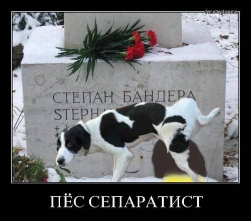 Украина_2017 1486716861_pes-separ