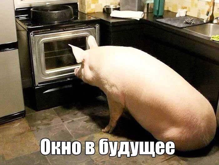 Москва приступила к проработке ответных санкций против США, - МИД РФ - Цензор.НЕТ 7237