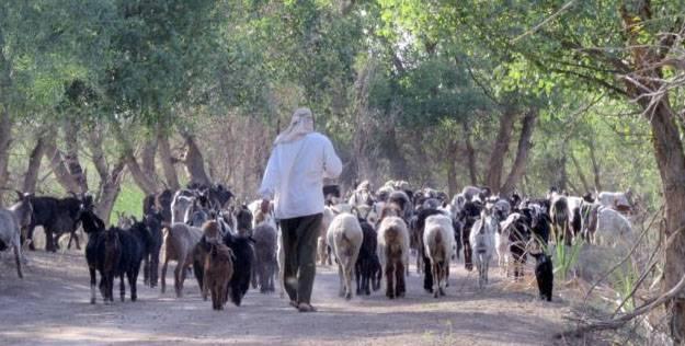Таджикистан обвинил узбекских таможенников в несоблюдении границы