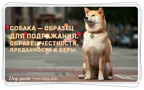 Собаки лучшие друзья человека цитаты