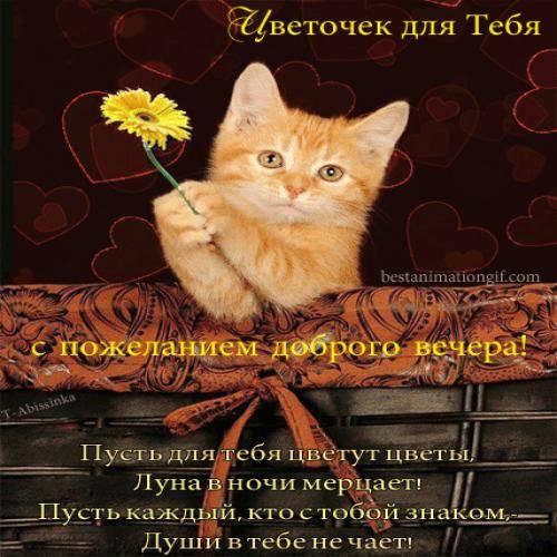 Добрый вечер прикольные поздравления