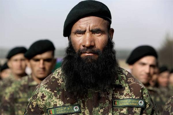 """США поставили в Афганистан """"лесной"""" камуфляж. Теперь ищут лес..."""