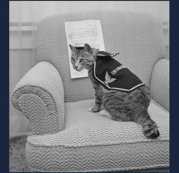 Ленинград быть с котом
