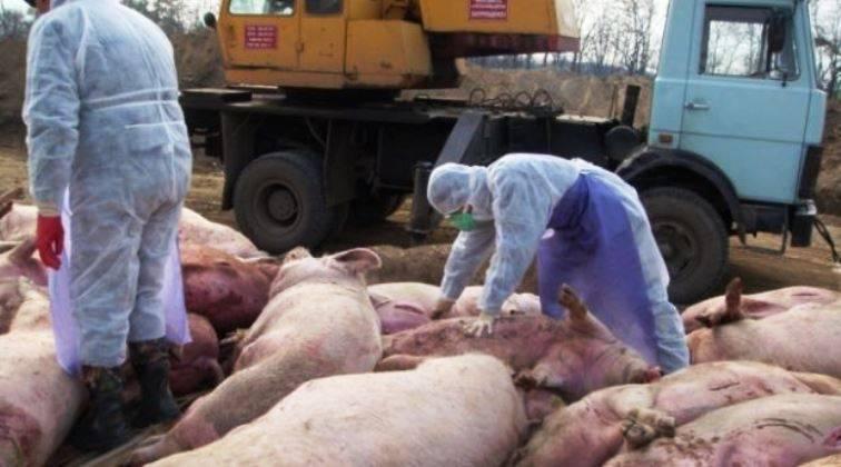 Donetsk proibiu a importação de carne de porco ucraniana para a república