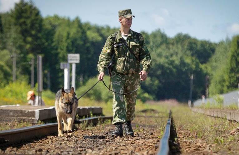 Observadores da OSCE se queixam de guardas de fronteira ucranianos decepcionando cães
