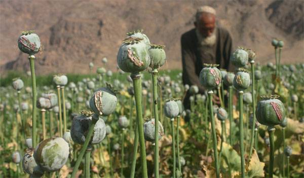 Trump has introduced a state of emergency in the United States due to opium addiction