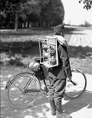 İsviçre askeri sinyalcisi. Birinci Dünya Savaşı.