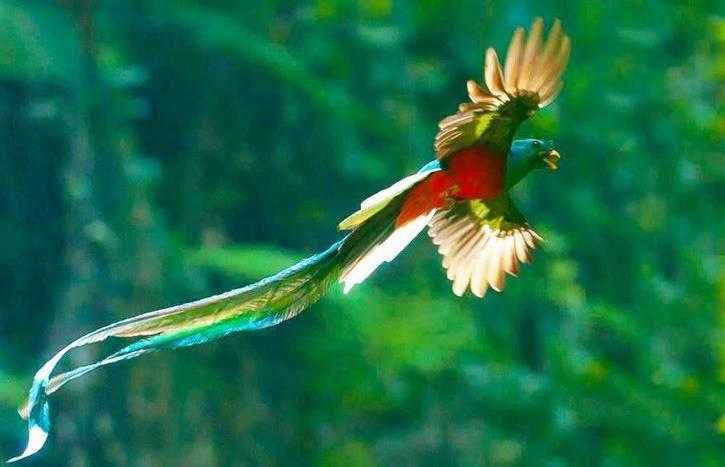 Конкистадоры и ацтеки: когда перья дороже золота! (часть вторая)