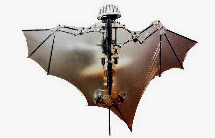 The Pentagon has conceived to create a drone in the form of a bat