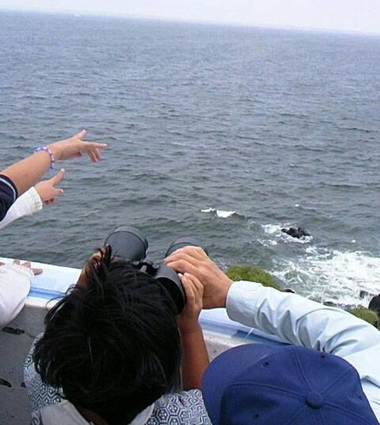 В МИД РФ заявили о прогрессе по вопросу совместного хозяйствования с Японией на Курилах