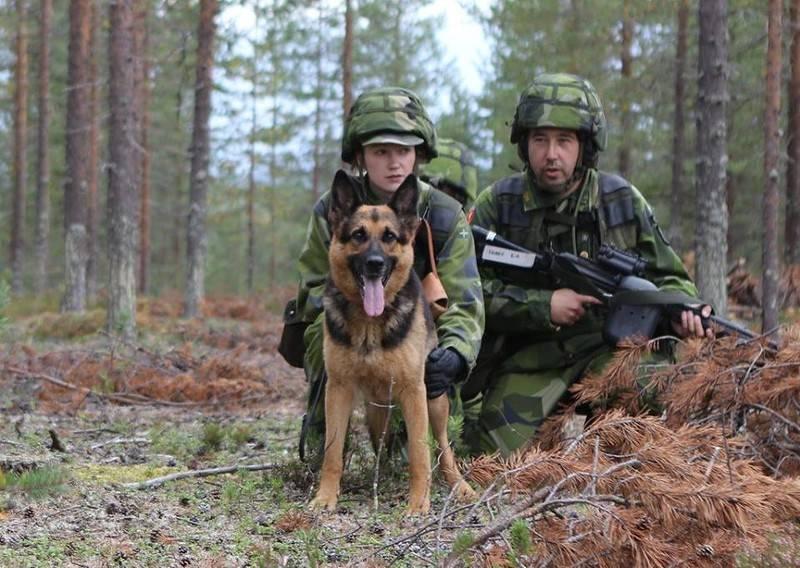 Швеция готовится партизанить против России